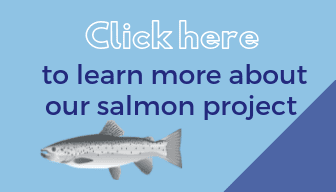 Button with link to HoloFood salmon project